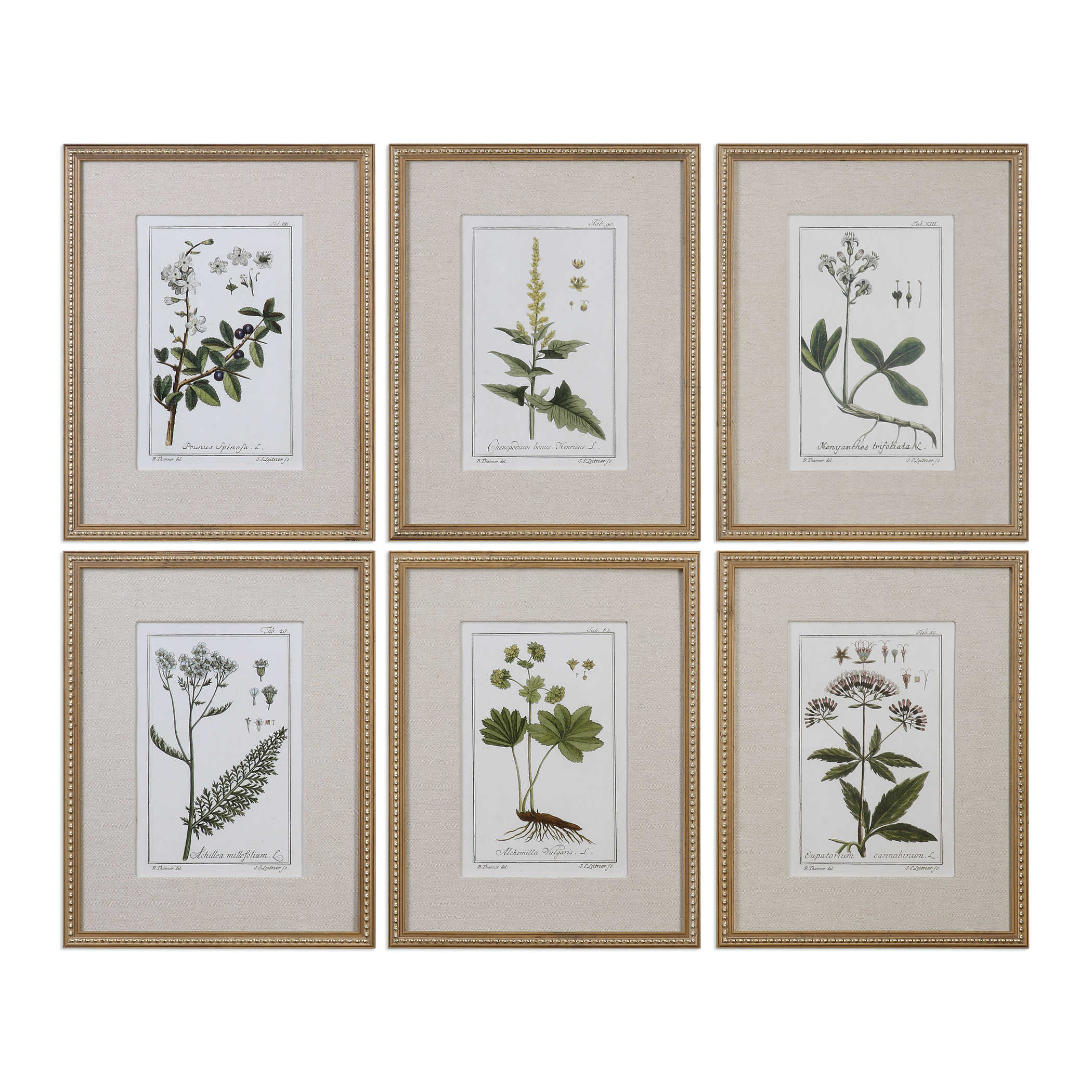 Green Floral Botanical Study Framed Prints, S/6 | Uttermost