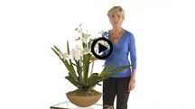 Moth Orchid Planter 60039.jpg